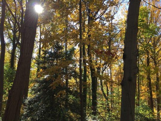 Hartshorne Woods is a 736-acre site in the Atlantic