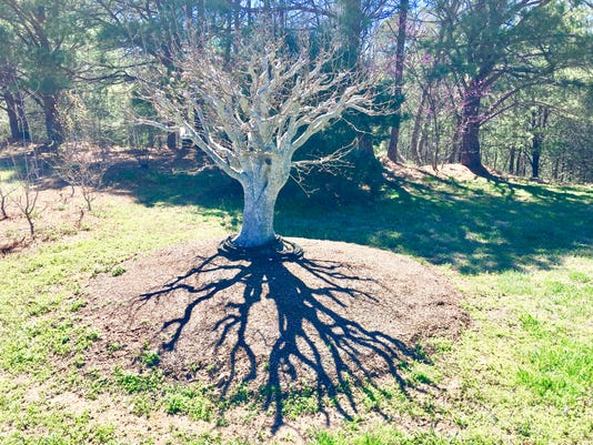 636275239903794537-Shadowtree-NC-Arboretum-Chris-Highland-20170415.jpeg