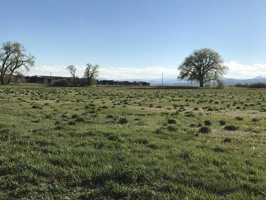 A proposal from Fort Collins developer JD Padilla would create nearly 250 new homes on Timberline Road across from Bacon Elementary School. The area is also home to the Hansen Farm,  which is also slated for a single-family development and apartment project.