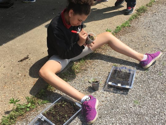 Glenwood Leadership Academy fifth graders transplanted seeds from mini greenhouses to cups to take home. This was during Shane Gibson, education director at Sycamore Land Trust, last visit of the year.