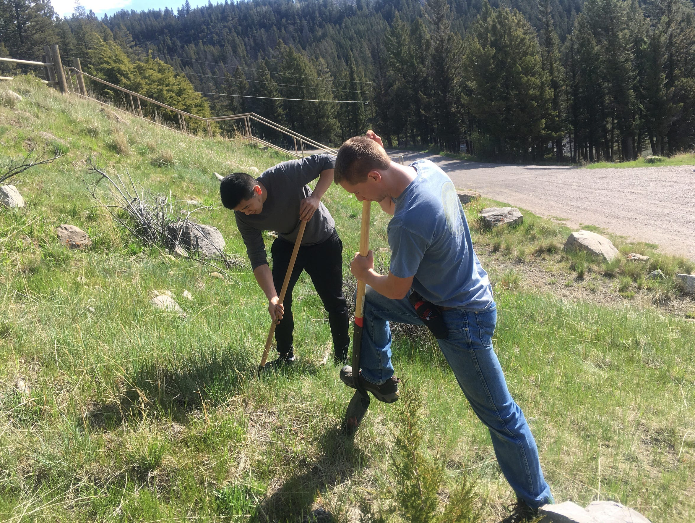 Volunteers pull noxious weeds at Gibson Lake on May