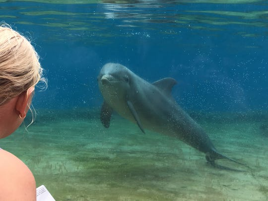Jennifer Trefelner's daughter, Olivia, enjoyed a 30-minute interaction session with dolphins during the family visit to Discovery Cove in Orlando.
