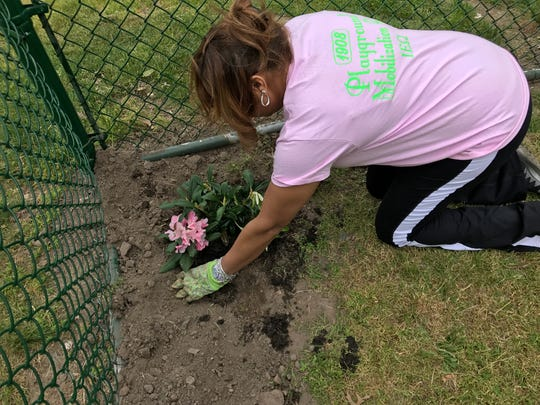 Alpha Kappa Alpha member Kim Y. Baker plants a flower bush around the fence of the playground during the dedication.