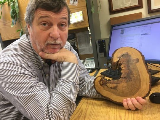 University of Tennessee geography professor Henri Grissino-Mayer, who studies tree rings, displays a segment from a tree in the Great Smoky Mountains National Park that reveals multiple fires through its growth.