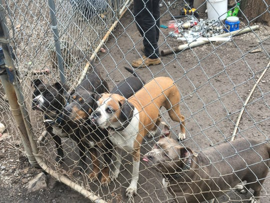 Mountainside Pet Rescue dogs watch volunteers working