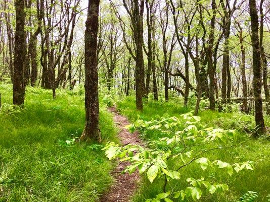 636323578518380317-Highland-Views-New-Green-Trail-Craggy-Gardens.jpeg