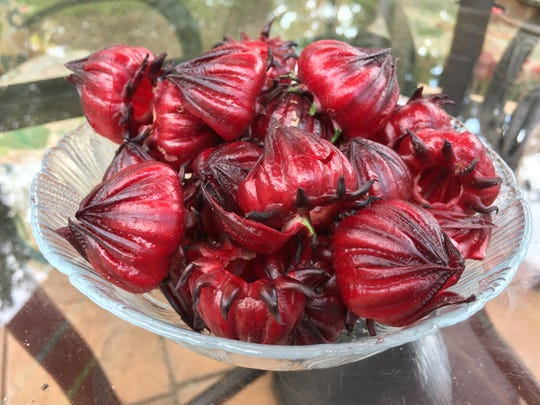 Roselle can be used fresh or dried in many dishes,