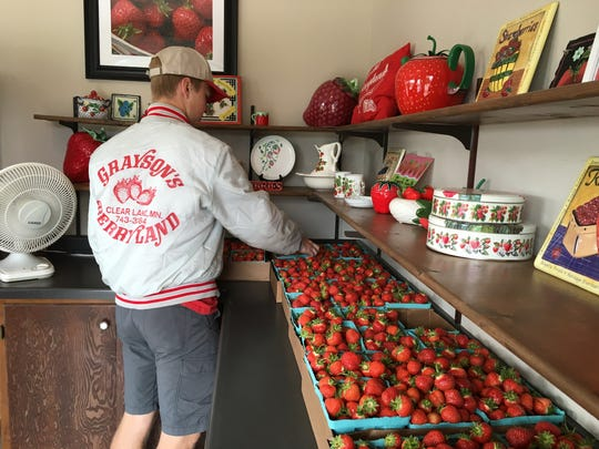 Ethan Gray packs containers of pre-picked strawberries inside the Grayson's Berryland fruit stand on Sunday, June 18, in Clear Lake.