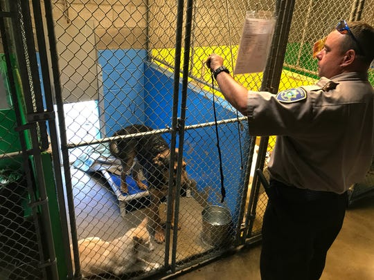 Redding Animal Regulations officer Travis McIvor tends to a German shepherd and Siberian husky rescued Sunday from a hot van. McIvor was attacked by the dogs' owner while freeing them.