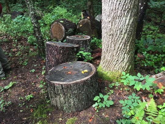 Scott Bobby Turner of Leicester was arrested Oct. 29 for civil contempt relating to a case of illegal timber harvesting on conservation land in Sandy Mush owned by the Southern Appalachian Highlands Conservancy.