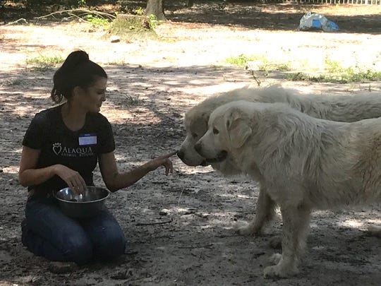 Tallahassee Big Dog Rescue andLeon County Humane Society were among 12 organizations that helped rescue 87 Great Pyrenees dogs and cats from an animal hoarding situation in Vernon.