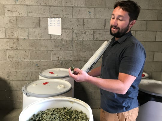 Garrett Rodewald is one of three co-founders at Gaica. Here he shows the cannabis waste before it is blended with ag waste and goes through a two-week fermentation process
