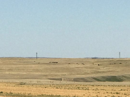 Arid grazing on a pasture near Savage in eastern Montana