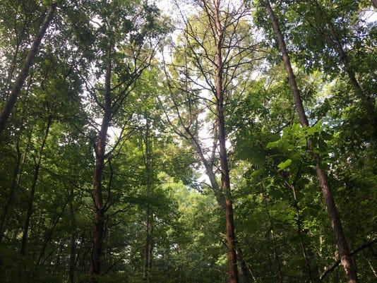 636359765019711811-EcoForesters0535.jpg