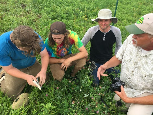 Ken Carman, right, leads the effort to save wildflowers at a field near Summit Park in Blue Ash. Volunteers, from left, John Potter, Charlie Murrell and Chris DeRhodes dropped everything to come to the site and save the native plants.