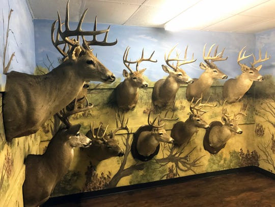 Vela's trophy collection stands at 40 whitetail, 12