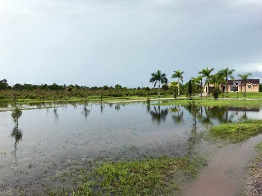 Attached are photos of water remaining in ditches and yards off 52nd Avenue Northeast east of Everglades Boulevard in Golden Gate Estates on Monday afternoon after morning rains from Tropical Storm Emily.