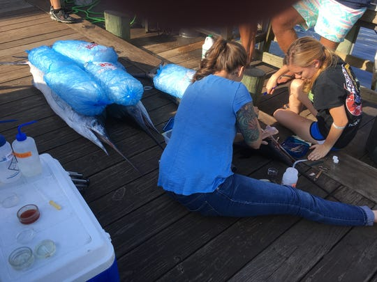 Students and faculty members from the University of Maryland check and analyse the first qualifying white marlin caught at this year's White Marlin Open.