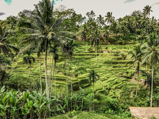 Joey Huempfner couldn't resist taking an image of the captivating rice terraces he witnessed.