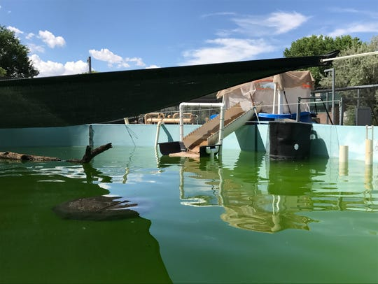 An outdoor tank at the Albuquerque BioPark is set up