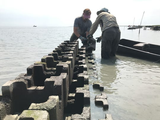 The Nature Conservancy Coastal Scientist Bo Lusk works with volunteer Sue Rice to hoist 30-pound concrete blocks into place to construct oyster castles in Short Prong Marsh.