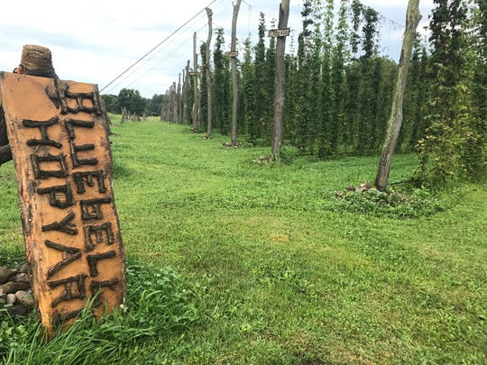Farmington's Bluebell Hopyard sits on just under two acres.