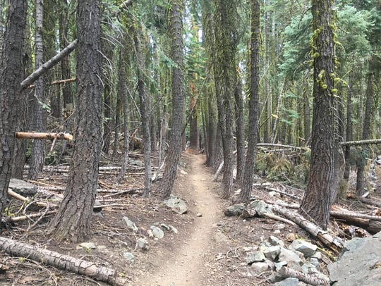 Wooded portion of the Mills Peak trail near Graeagle,