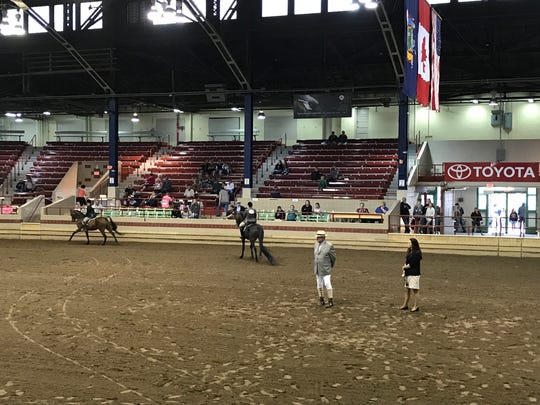Horse competition at NYS Fair