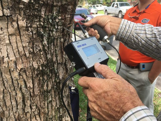 Inspecting trees for Formosan termite activity in Jacksonville,