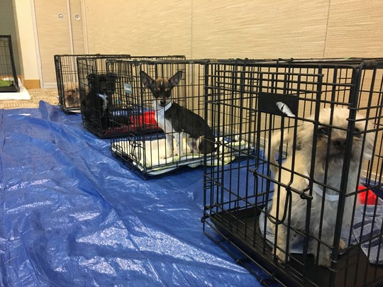 Adoptable puppies waiting for their forever home at the first-annual DogCruces Pet Expo on Saturday, Sept. 9.
