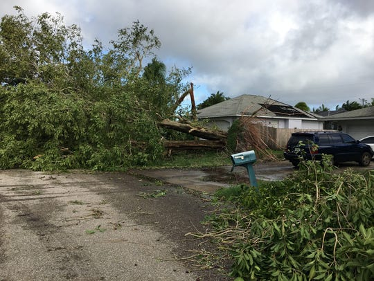 Hurricane Irma knocked over a big oak tree at Andre