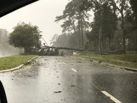 Tree down on Mahan Drive (westbound lane) just west