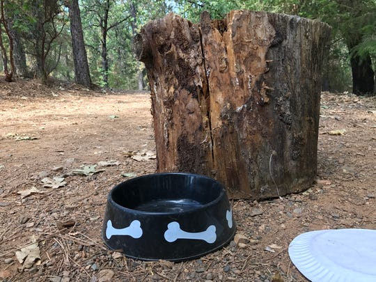 A dog bowl and wooden stump were about the only things left at the now-vacant spot once occupied by murder victim Michael Douglas Graves.