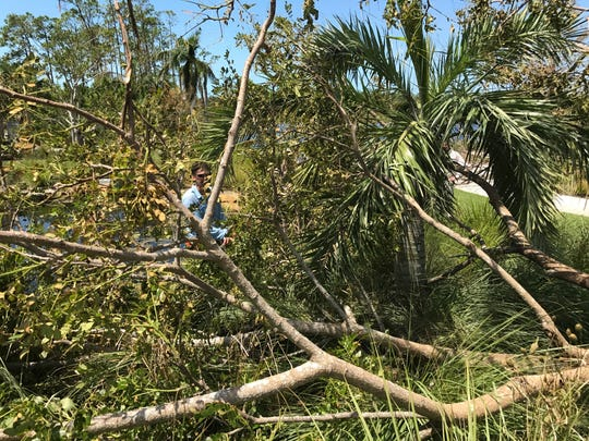 Brian Galligan, director of horticulture, inspects a downed tree Tuesday, Sept. 12, 2017, at Naples Botanical Garden after Hurricane Irma.