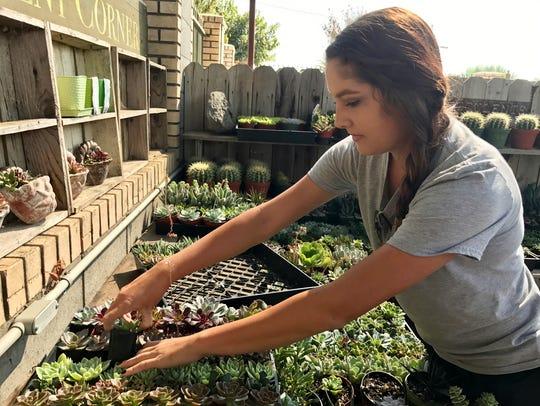 Kara  Bryant, restocks succulents Monday morning  at