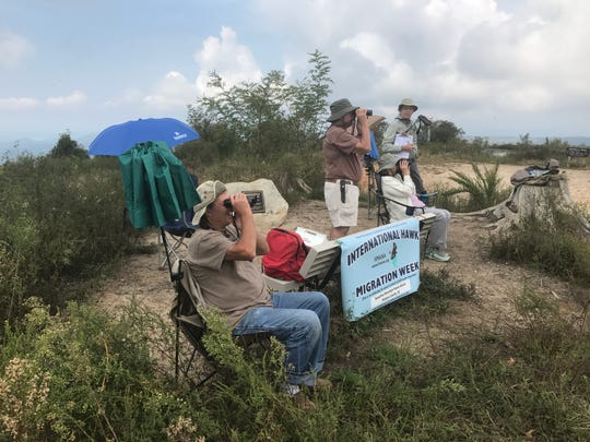 Andrew Bowers,left, gets a kick out of sighting a pair of broad-winged hawks from atop Sassafras Mountain, with fellow hawk watchers Bill Brady, Elizabeth Galloway and Ed Moorer.