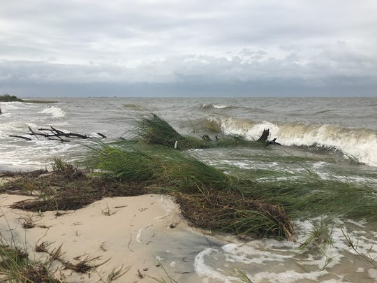 Despite remaining offshore, Hurricane Jose brought heavy winds and high water to the Eastern Shore Tuesday. Even the peninsula's bayside, pictured here near East Point,  received wave action from the Category 1 hurricane.