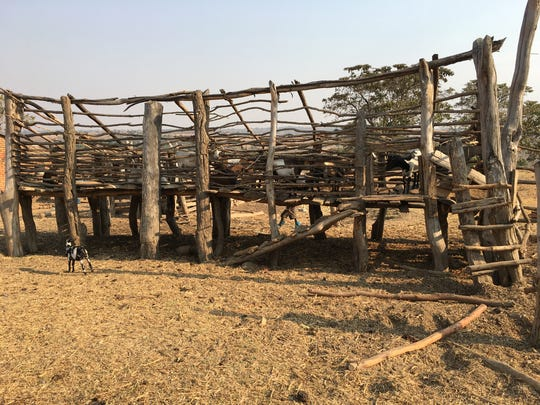Elevated Goat corral in Mbeya Region, Tanzania.  This corral protects the goats at night from hyenas.