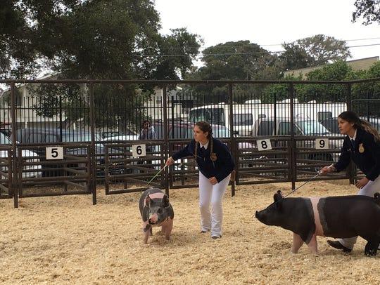 Kiley Piini of Salinas High FFA, left, shows a market