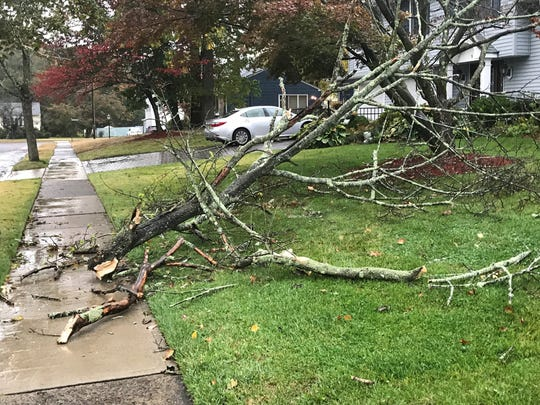 Tree branches fell on a Leslie Drive lawn in Wayne