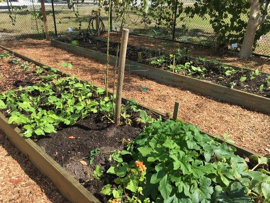 636448241749703297-community-garden.jpg