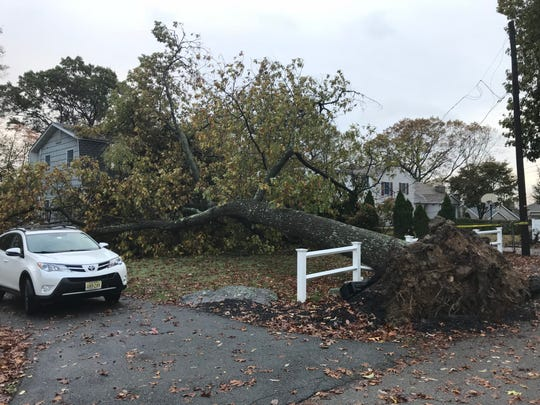 A large tree fell on a Hillview Terrace house in Denville