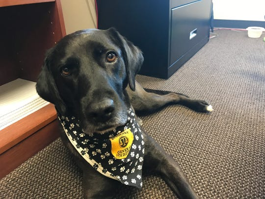 Jake, the comfort dog of the Anderson County District Attorney General's Office, has a calm manner and a gentle heart.