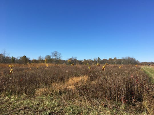 Cowbane Prairie Natural Area Preserve in Stuarts Draft, Va., which will be enlarged using funds from the South River DuPont settlement.