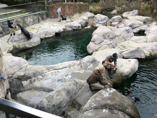 The sea lions are fed separately at the Seneca Park