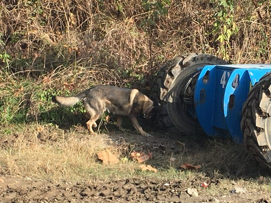 Aries, a Henderson County Sheriff's Office K-9, assists in the investigation Monday following the Saturday discovery of the body of Donald Xavier Jackson Freels near Ellis Park.