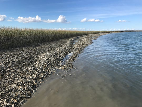 Dredged shell is providing habitat for oysters in Cedar Creek, offshore from the village of Oyster. In addition to the acre of oyster reef that will eventually open for public harvest, the project will include 2 acres of protected oyster reef.