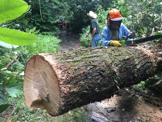 Christine Vigue of Backcountry Horsemen cuts out a hemlock that was blocking the South Mills River Trail. The group maintains 100 miles of multi-use trails in the Pisgah National Forest.