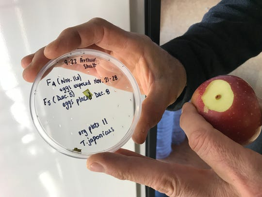 The Cornell University Hudson Valley Lab began breeding