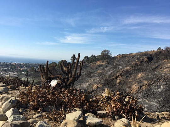Staff at the Ventura Botanical Gardens said they expect as much as 80 percent of the collection's plants to survive the fire.